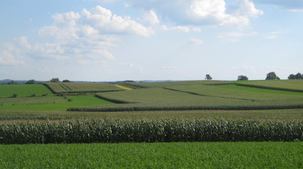 running, farmland, 7feetnorth